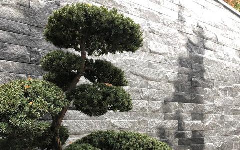 Bonsai nahe Natursteinmauer